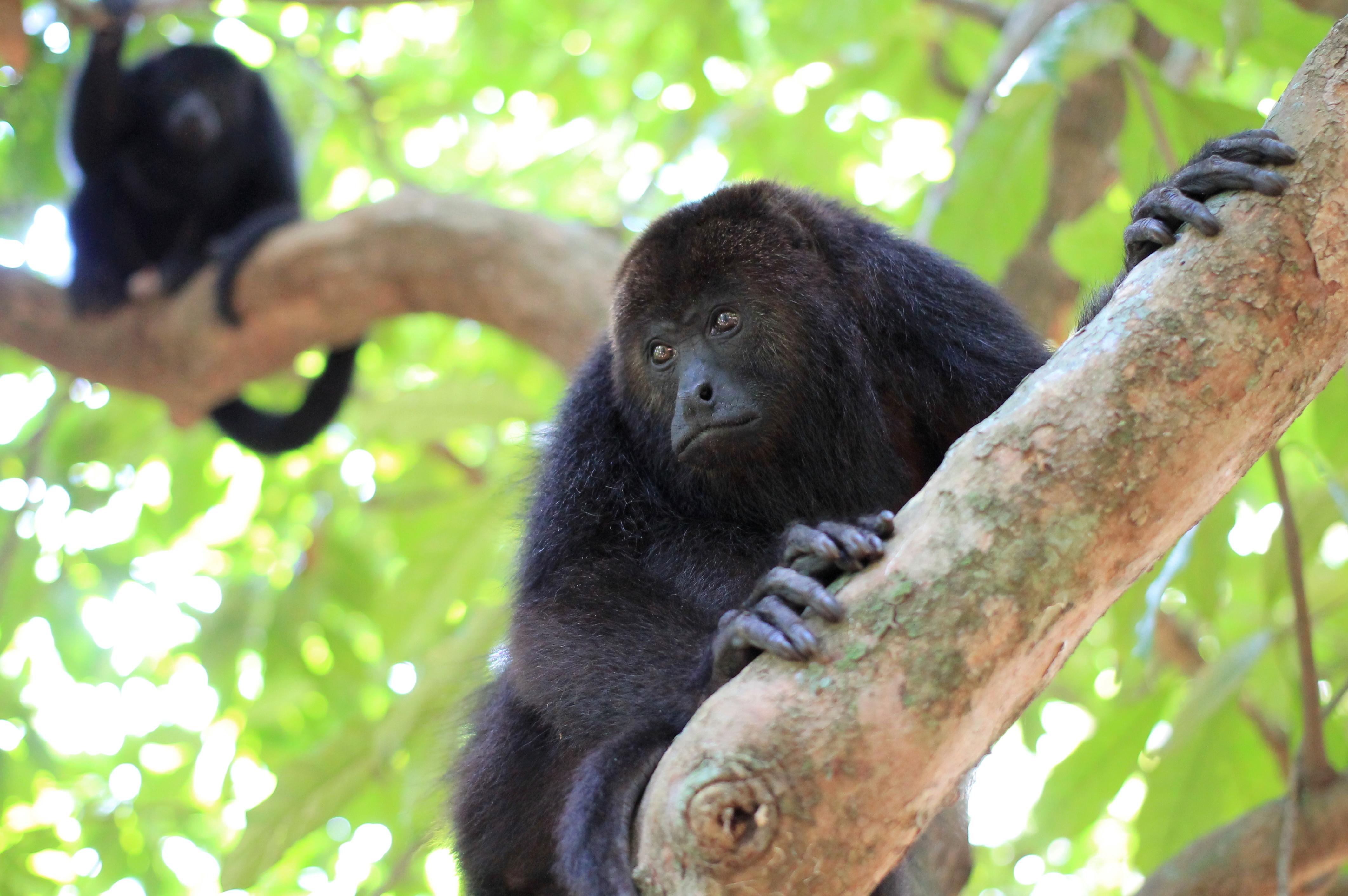 Placencia Belize Monkey River Tours
