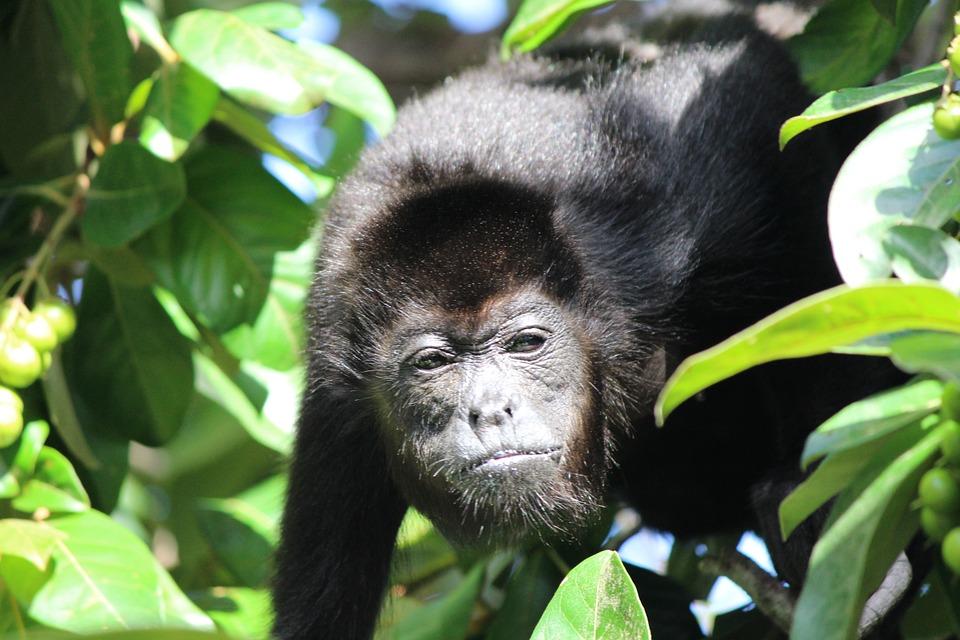 belize's best jungle adventures